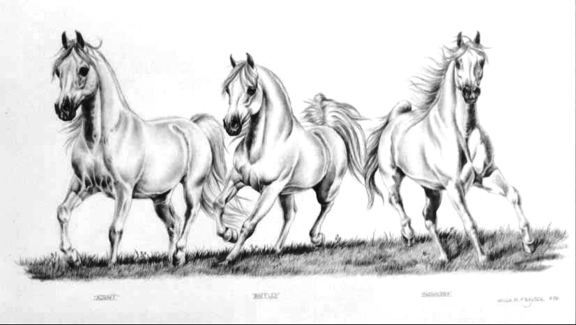 Running arabian horse drawing - photo#24