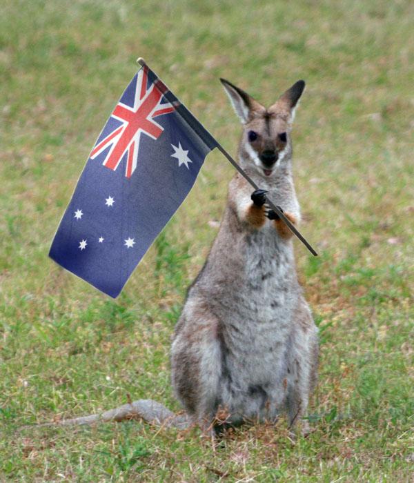Aussie Wally happy australia day the colourful australian language aussie