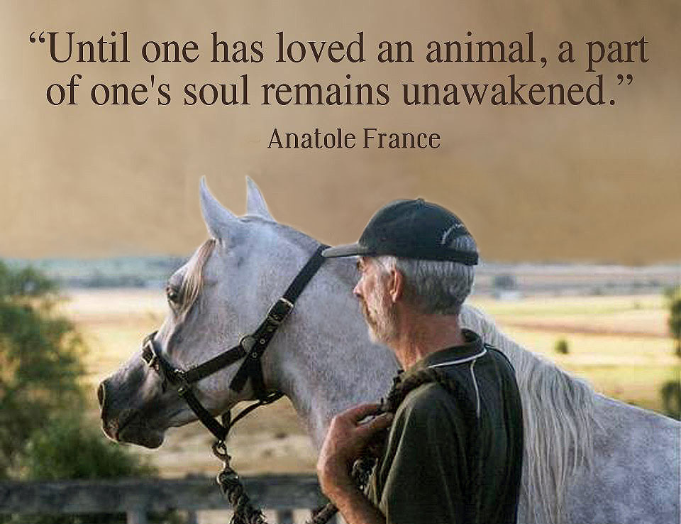 The Animals In Our LivesSunday Quote Of The Week Carmelrowleyau Delectable Love Animal Quotes