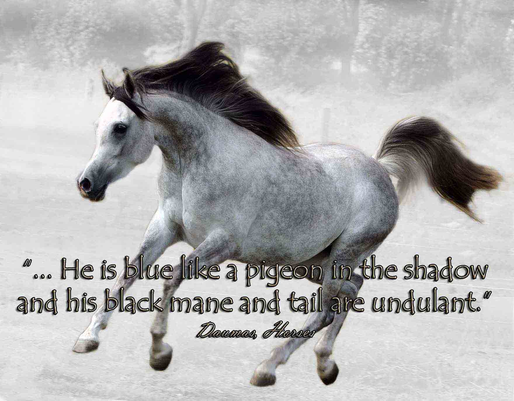 Arabian Horse Quotes Quotes Words